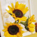 You are My Sunshine Rustic Sunflower 1st Birthday Party